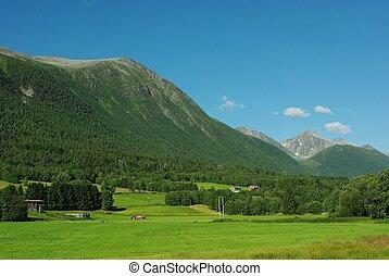 gyönyörű, norvégia, vidéki, hegy parkosít