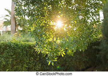 gyönyörű, nyár, bitófák, zöld fű, táj