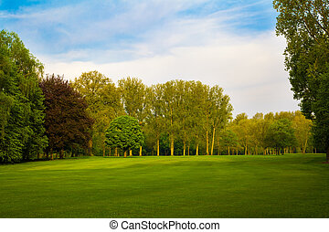 gyönyörű, nyár, parkosít., bitófák, mező, zöld