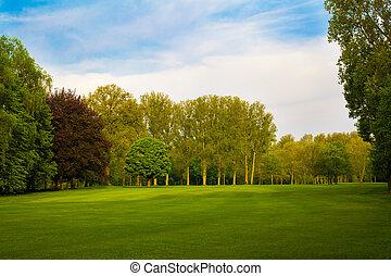 gyönyörű, nyár, parkosít., zöld terep, és, bitófák