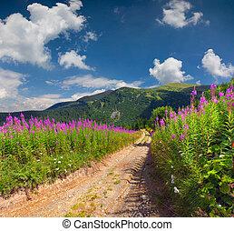 gyönyörű, nyár, táj, a hegyekben, noha, rózsaszínű virág