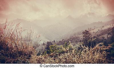 gyönyörű, nyár, táj, a hegyekben