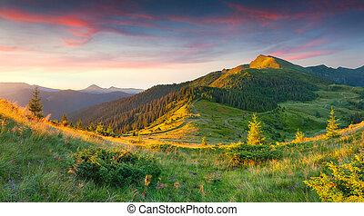 gyönyörű, nyár, táj, hegyek