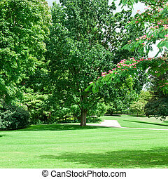 gyönyörű, nyár, zöld, pázsit, liget