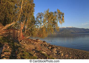 gyönyörű, nyírfa, képben látható, a, part, közül, egy, hegy tó