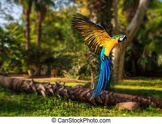 gyönyörű, papagáj, felett, tropikus, háttér, színpompás