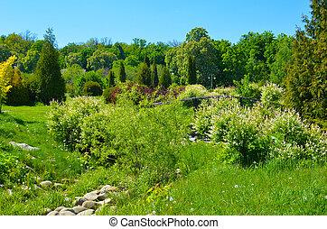 gyönyörű, parkosít., eredet, nature., liget, bitófák, zöld fű