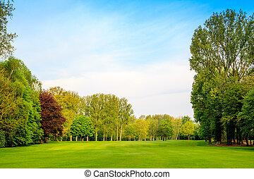 gyönyörű, parkosít., zöld erdő, field., fű