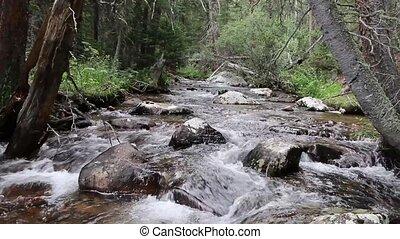 gyönyörű, patak, alatt, a, erdő