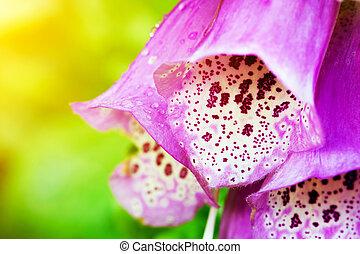 gyönyörű, rózsaszínű virág, alatt, sunlight., természet