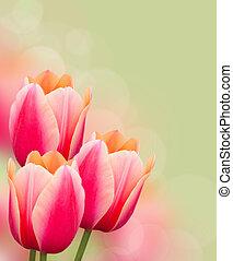 gyönyörű, rózsaszínű, zöld háttér, tulipánok