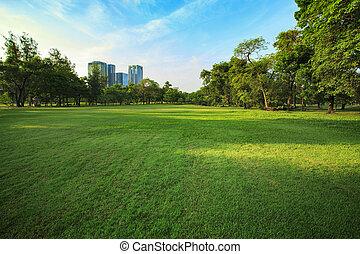 gyönyörű, reggel, fény, alatt, általános dísztér, noha, tábori repülőtér, és, zöld, környezet, alkalmaz, mint, háttér