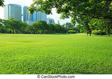 gyönyörű, reggel, fény, alatt, általános dísztér, noha, zöld fű, mező, és, zöld, friss, fa, berendezés, kilátás, fordíts, másol világűr, helyett, több célú