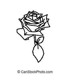 gyönyörű, skicc, illustration., kivirul, rose., mód, fekete, monochrom, white virág, texture.