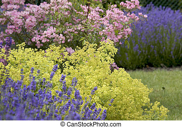 gyönyörű, spring., kert