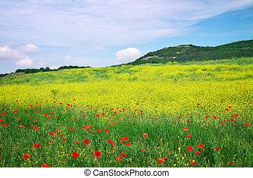 gyönyörű, táj, noha, flowers., visszaugrik virág, meadow.