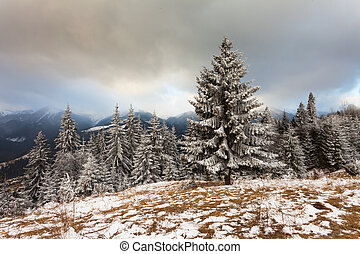 gyönyörű, tél parkosít, noha, hó megtesz fa