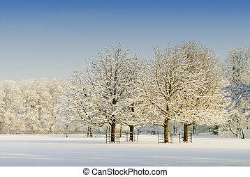 gyönyörű, tél parkosít