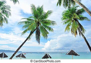 gyönyörű, tengerpart, pálma fa
