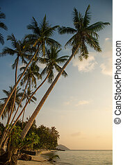 gyönyörű, tropical tengerpart, alatt, a, este