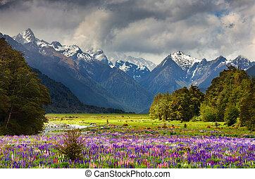 gyönyörű, völgy