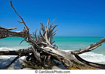 gyönyörű, viharvert, úsztatott fa