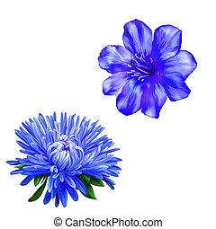 gyönyörű, világos blue, flower., elszigetelt, képben...