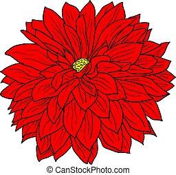 gyönyörű, virág, skicc, elpirul háttér, dália, fehér
