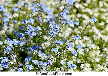 gyönyörű, visszaugrik virág, háttér