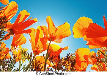 gyönyörű, visszaugrik virág