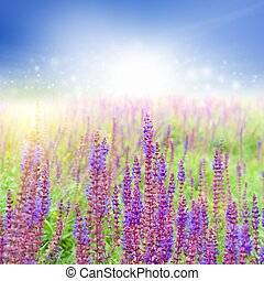 gyönyörű, wildflowers