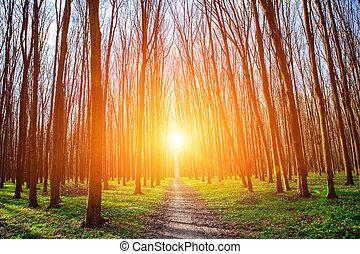 gyönyörű, zöld erdő