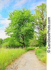 gyönyörű, zöld fa, táj