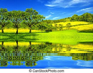 gyönyörű, zöld, környezet