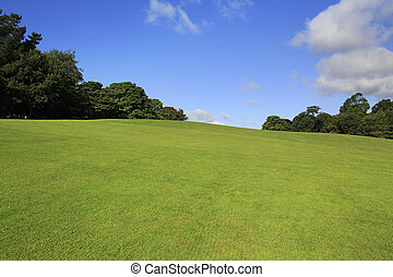 gyönyörű, zöld pázsit, alatt, nyár, park.