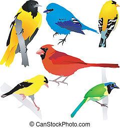 gyűjtés, közül, birds., vektor, eps10