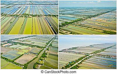 gyűjtés, közül, felülnézet, közül, rizs terep, terasz, alatt, thaiföld