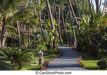 gyalogút, és, pálma, alatt, tropikus, garden., sziget, koh samui, thaiföld
