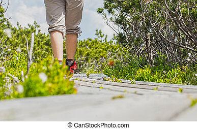 gyalogló, képben látható, egy, wooden út