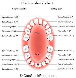 gyerekek, fogászati, diagram