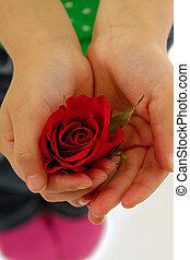 gyermek, birtok, rózsa, virág, alatt, kéz