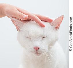 gyermek, kéz, cirógató, fő of, fehér, cat.
