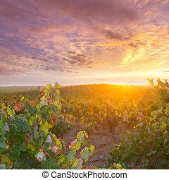 gylden, efterår, vingårde, solnedgang, utiel, requena, rød