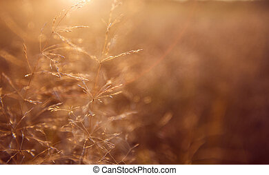 gylden, græs