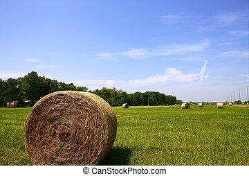 gylden, hø, countryside, halmstrå, amerikaner, baller