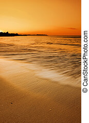 gylden, strand, solnedgang