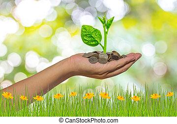 gyllene, besparing, träd, mynter, -, hand hålla pengar, ...