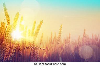 gyllene, konst, solig, fält, vete, dag