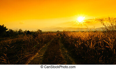 gyllene, lätt, hög, lantlig, genom, sol, solnedgång, desho, gräs, fjäll., väg