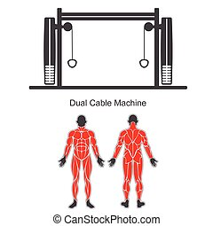 Gym dual cable machine - Gym machine and human muscles...